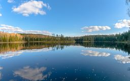The lake in the forest. Belarus stock photography