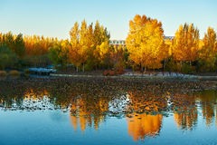 The lake and golden trees Stock Photo