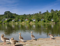 Lake with geese and lodges for free time Stock Photo