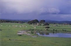 Lake Grace. In the Eastern Wheat belt region of Western Australia Royalty Free Stock Photo