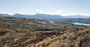 Lake of Granada. Forest in the Spanish province of Granada with lake in a sunny day, in the background are the mountains. You can see some olives trees Royalty Free Stock Photo