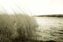 Lake and grass Stock Photography