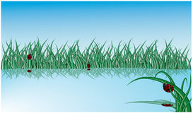 Lake with grass and ladybugs Royalty Free Stock Images