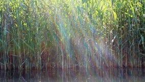Lake grass pan with sun beams stock video
