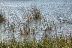 Lake with Grass and Rippled Water Background royalty free stock photo