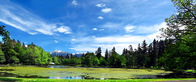 Lake in green environment with snowy mountains in background Royalty Free Stock Image