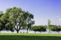 Lake and green lawn royalty free stock photography