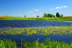 Lake and green meadow Stock Photos