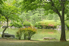 Lake, green plant, tree, flower in Japanese zen garden Royalty Free Stock Photo