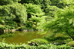 Lake, green plant, tree in Japanese zen garden Royalty Free Stock Photo