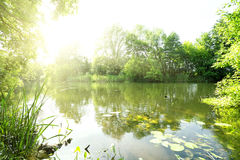 Lake with green trees on shore Stock Photography