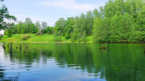 Lake with green water in the forest. Taken from water Stock Image