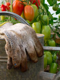Lake in the greenhouse. Photo image of the old watering can next to the tomatoes in the greenhouse stock photo