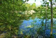 A lake with growing algae seen through tree branches Royalty Free Stock Photos