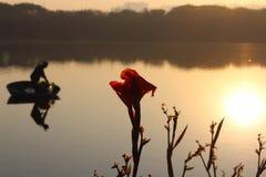 Lake Habitat Royalty Free Stock Photos