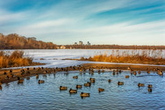 Lake Harriet in Minneapolis Minnesota Stock Image