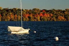 Lake Harriet Sail Boat against Colorful Autumn Foliage Royalty Free Stock Images