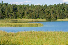 Lake with high grass Stock Photos