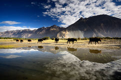 Lake on Himalaya Stock Images