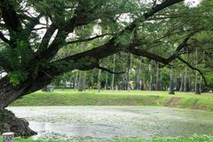 Lake in the historical park in sukhothai Stock Photo