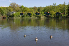 Lake with holiday homes, geese and duck Royalty Free Stock Photography