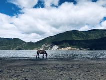 Lake and horse stock photography