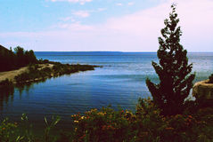 Lake huron. A pine tree on the shore of lake huron Royalty Free Stock Image