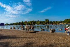 Lake Hyde Park in London, England, UK. Architecture, britain, british, city, england, english, europe, garden, hyde, kensington, kingdom, lake, landmark royalty free stock photography