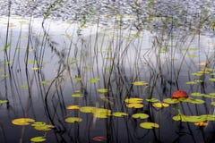 Lake i höst Arkivfoton