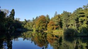 Lake i skog Royaltyfria Foton