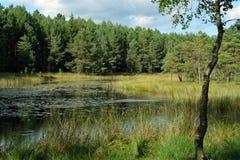Lake i skogen Arkivfoton