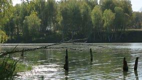 Lake i skogen stock video