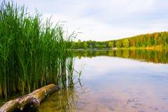 Lake i skogen Arkivfoto