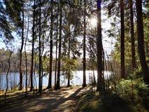 Lake i skogen royaltyfria bilder
