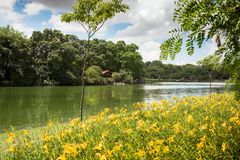 Lake of Ibirapuera Park stock images