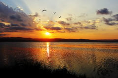 Lake idyll at sunset with gulls flying Stock Photography