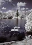 Lake infrared. Lake photographed in infrared light Royalty Free Stock Images