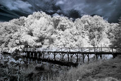 Lake in infrared Stock Image