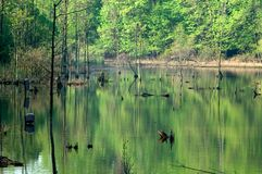 Lake Isaac. View of the southern end of Lake Isaac, a bird sanctuary Royalty Free Stock Photo