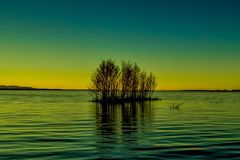 Lake island. Lonely little island with trees in the lake at sunset in summer Stock Image