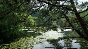 Lake. Japan. Mountain lake in Fukuoka prefecture royalty free stock photo