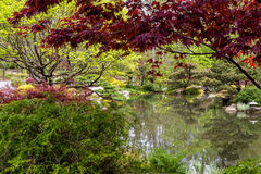 Lake Through Japanese Maples Stock Images