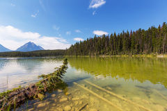 Lake in Jasper. Lake and Mount Edith Cavell in Jasper National Park, Canada Royalty Free Stock Image