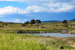 Lake Jindabyne foreshore in Australia. Lake Jindabyne foreshore on an autumn (fall) afternoon in Australia Royalty Free Stock Photos