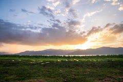 Lake Jipe at the border of Kenya and Tanzania, Africa Stock Image