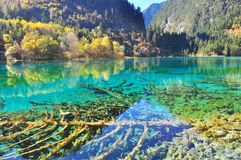 Lake at Jiuzhaigou with clear blue water Royalty Free Stock Images