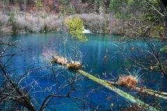 Lake at Jiuzhaigou with colorful tress and blue water Stock Photography