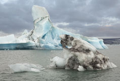 Lake Jokulsarlon Royalty Free Stock Photo
