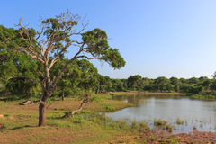 Lake in jungle Royalty Free Stock Image
