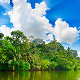 Lake in jungle Stock Image